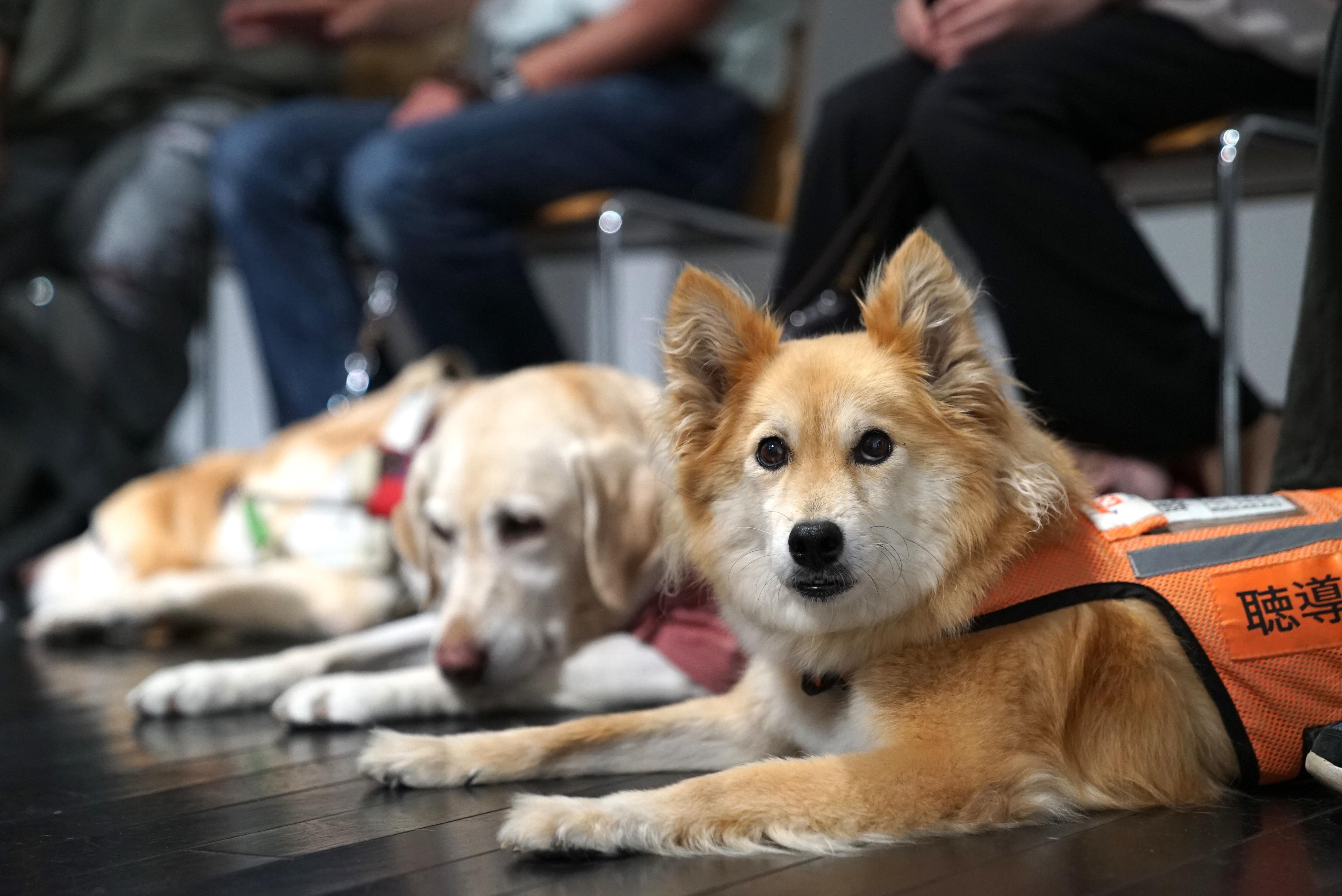 日本補助犬情報センター 補助犬法施行から15年で試み                                    10月1日【 #ほじょ犬の日 】であなたの「ありがとう」をつぶやいて