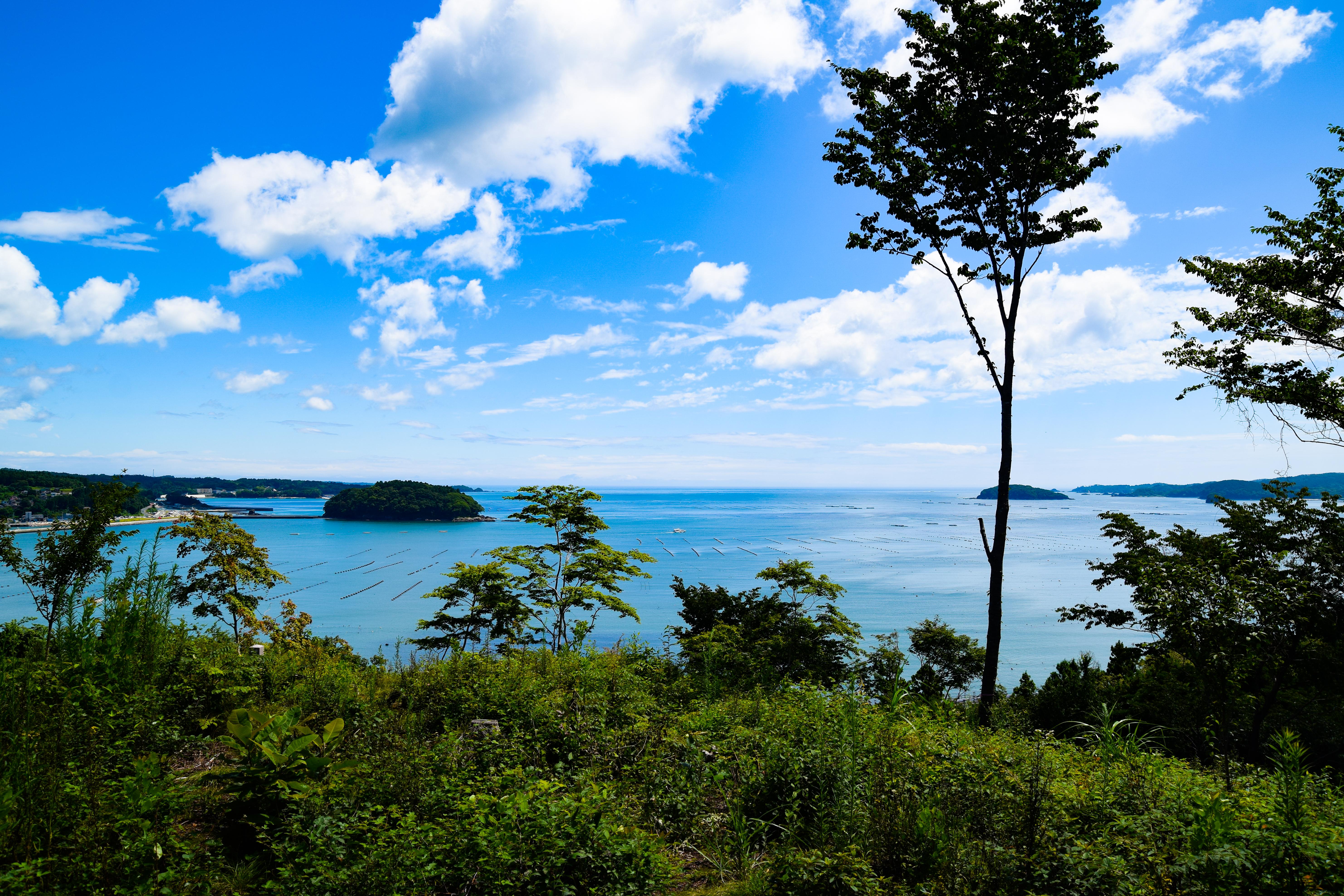 海の見える命の森